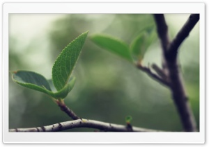 Soft Leaf HD Wide Wallpaper for Widescreen