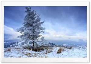 Solitary Fir Tree, Winter Ultra HD Wallpaper for 4K UHD Widescreen desktop, tablet & smartphone