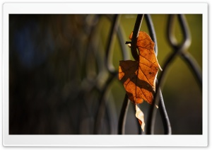 Solitary Leaf HD Wide Wallpaper for Widescreen