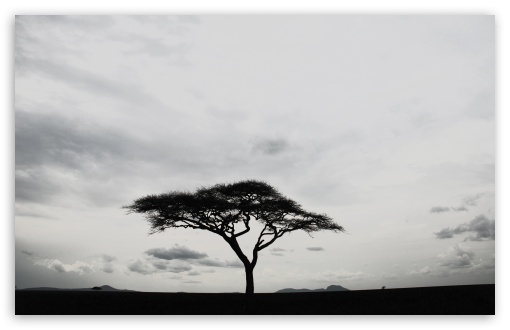 Solitary Tree ❤ 4K UHD Wallpaper for Wide 16:10 5:3 Widescreen WHXGA WQXGA WUXGA WXGA WGA ; 4K UHD 16:9 Ultra High Definition 2160p 1440p 1080p 900p 720p ; Standard 4:3 5:4 3:2 Fullscreen UXGA XGA SVGA QSXGA SXGA DVGA HVGA HQVGA ( Apple PowerBook G4 iPhone 4 3G 3GS iPod Touch ) ; Tablet 1:1 ; iPad 1/2/Mini ; Mobile 4:3 5:3 3:2 16:9 5:4 - UXGA XGA SVGA WGA DVGA HVGA HQVGA ( Apple PowerBook G4 iPhone 4 3G 3GS iPod Touch ) 2160p 1440p 1080p 900p 720p QSXGA SXGA ;