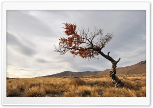 Solitary Tree HD Wide Wallpaper for Widescreen