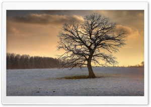 Solitary Tree, Winter HD Wide Wallpaper for 4K UHD Widescreen desktop & smartphone