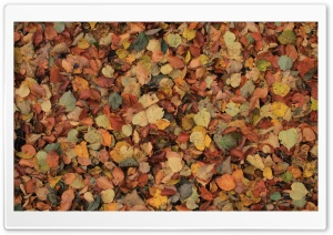 Something Leaves HD Wide Wallpaper for Widescreen
