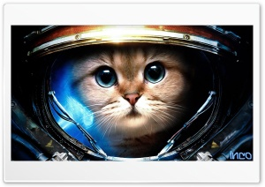 SpaceCat HD Wide Wallpaper for 4K UHD Widescreen desktop & smartphone