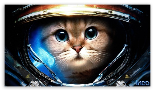 SpaceCat ❤ 4K UHD Wallpaper for 4K UHD 16:9 Ultra High Definition 2160p 1440p 1080p 900p 720p ; Mobile 16:9 - 2160p 1440p 1080p 900p 720p ;