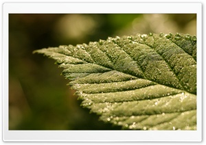 Sparkle Bokeh On Leaf HD Wide Wallpaper for Widescreen