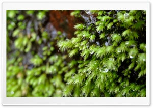 Sparkling Starry Moss HD Wide Wallpaper for Widescreen