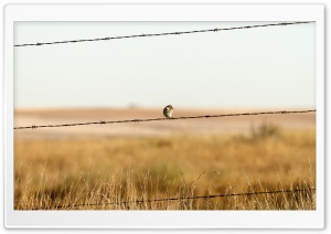 Sparrow On Barbed Wire Fence HD Wide Wallpaper for Widescreen