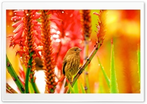 Sparrow perched on Aloe HD Wide Wallpaper for Widescreen