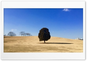 Special Tree HD Wide Wallpaper for Widescreen