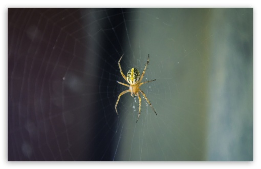 Spider ❤ 4K UHD Wallpaper for Wide 16:10 5:3 Widescreen WHXGA WQXGA WUXGA WXGA WGA ; 4K UHD 16:9 Ultra High Definition 2160p 1440p 1080p 900p 720p ; UHD 16:9 2160p 1440p 1080p 900p 720p ; Standard 4:3 5:4 3:2 Fullscreen UXGA XGA SVGA QSXGA SXGA DVGA HVGA HQVGA ( Apple PowerBook G4 iPhone 4 3G 3GS iPod Touch ) ; Tablet 1:1 ; iPad 1/2/Mini ; Mobile 4:3 5:3 3:2 16:9 5:4 - UXGA XGA SVGA WGA DVGA HVGA HQVGA ( Apple PowerBook G4 iPhone 4 3G 3GS iPod Touch ) 2160p 1440p 1080p 900p 720p QSXGA SXGA ;