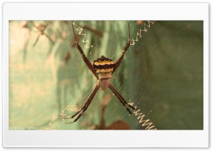 Spider HD Wide Wallpaper for Widescreen