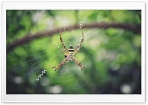 Spider Ultra HD Wallpaper for 4K UHD Widescreen desktop, tablet & smartphone