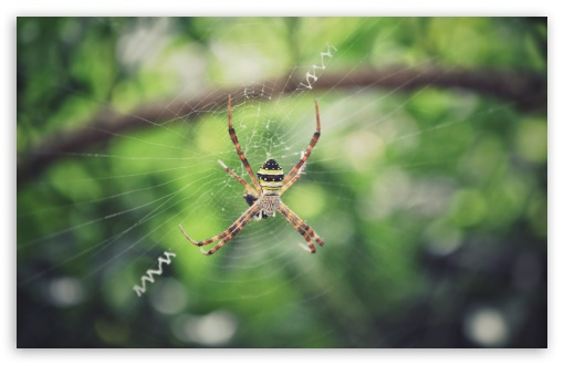 Spider ❤ 4K UHD Wallpaper for Wide 16:10 5:3 Widescreen WHXGA WQXGA WUXGA WXGA WGA ; UltraWide 21:9 24:10 ; 4K UHD 16:9 Ultra High Definition 2160p 1440p 1080p 900p 720p ; UHD 16:9 2160p 1440p 1080p 900p 720p ; Standard 4:3 5:4 3:2 Fullscreen UXGA XGA SVGA QSXGA SXGA DVGA HVGA HQVGA ( Apple PowerBook G4 iPhone 4 3G 3GS iPod Touch ) ; Smartphone 16:9 3:2 5:3 2160p 1440p 1080p 900p 720p DVGA HVGA HQVGA ( Apple PowerBook G4 iPhone 4 3G 3GS iPod Touch ) WGA ; Tablet 1:1 ; iPad 1/2/Mini ; Mobile 4:3 5:3 3:2 16:9 5:4 - UXGA XGA SVGA WGA DVGA HVGA HQVGA ( Apple PowerBook G4 iPhone 4 3G 3GS iPod Touch ) 2160p 1440p 1080p 900p 720p QSXGA SXGA ; Dual 16:10 5:3 16:9 4:3 5:4 3:2 WHXGA WQXGA WUXGA WXGA WGA 2160p 1440p 1080p 900p 720p UXGA XGA SVGA QSXGA SXGA DVGA HVGA HQVGA ( Apple PowerBook G4 iPhone 4 3G 3GS iPod Touch ) ;