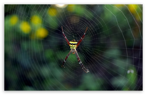 Spider ❤ 4K UHD Wallpaper for Wide 16:10 5:3 Widescreen WHXGA WQXGA WUXGA WXGA WGA ; 4K UHD 16:9 Ultra High Definition 2160p 1440p 1080p 900p 720p ; Standard 4:3 5:4 3:2 Fullscreen UXGA XGA SVGA QSXGA SXGA DVGA HVGA HQVGA ( Apple PowerBook G4 iPhone 4 3G 3GS iPod Touch ) ; Smartphone 16:9 3:2 5:3 2160p 1440p 1080p 900p 720p DVGA HVGA HQVGA ( Apple PowerBook G4 iPhone 4 3G 3GS iPod Touch ) WGA ; Tablet 1:1 ; iPad 1/2/Mini ; Mobile 4:3 5:3 3:2 16:9 5:4 - UXGA XGA SVGA WGA DVGA HVGA HQVGA ( Apple PowerBook G4 iPhone 4 3G 3GS iPod Touch ) 2160p 1440p 1080p 900p 720p QSXGA SXGA ;