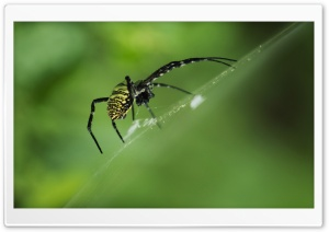 Spider HD Wide Wallpaper for 4K UHD Widescreen desktop & smartphone