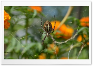 Spider Closeup HD Wide Wallpaper for Widescreen