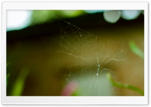 Spider in a Web HD Wide Wallpaper for Widescreen