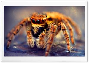 Spider Macro HD Wide Wallpaper for Widescreen