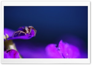 Spider on a Purple Flower HD Wide Wallpaper for Widescreen