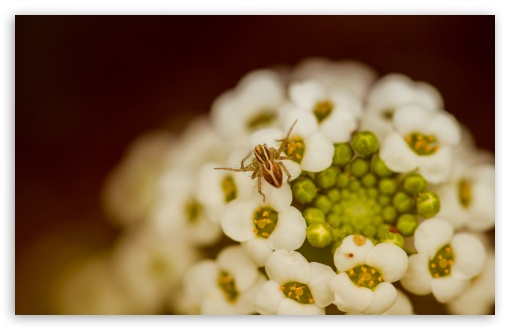 Spider On A White Flower ❤ 4K UHD Wallpaper for Wide 16:10 5:3 Widescreen WHXGA WQXGA WUXGA WXGA WGA ; 4K UHD 16:9 Ultra High Definition 2160p 1440p 1080p 900p 720p ; UHD 16:9 2160p 1440p 1080p 900p 720p ; Standard 4:3 5:4 3:2 Fullscreen UXGA XGA SVGA QSXGA SXGA DVGA HVGA HQVGA ( Apple PowerBook G4 iPhone 4 3G 3GS iPod Touch ) ; Smartphone 5:3 WGA ; Tablet 1:1 ; iPad 1/2/Mini ; Mobile 4:3 5:3 3:2 16:9 5:4 - UXGA XGA SVGA WGA DVGA HVGA HQVGA ( Apple PowerBook G4 iPhone 4 3G 3GS iPod Touch ) 2160p 1440p 1080p 900p 720p QSXGA SXGA ; Dual 16:10 5:3 16:9 4:3 5:4 WHXGA WQXGA WUXGA WXGA WGA 2160p 1440p 1080p 900p 720p UXGA XGA SVGA QSXGA SXGA ;