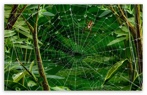 Spider On Web HD wallpaper for Standard 4:3 5:4 Fullscreen UXGA XGA SVGA QSXGA SXGA ; Wide 16:10 5:3 Widescreen WHXGA WQXGA WUXGA WXGA WGA ; HD 16:9 High Definition WQHD QWXGA 1080p 900p 720p QHD nHD ; Other 3:2 DVGA HVGA HQVGA devices ( Apple PowerBook G4 iPhone 4 3G 3GS iPod Touch ) ; Mobile VGA WVGA iPhone iPad PSP Phone - VGA QVGA Smartphone ( PocketPC GPS iPod Zune BlackBerry HTC Samsung LG Nokia Eten Asus ) WVGA WQVGA Smartphone ( HTC Samsung Sony Ericsson LG Vertu MIO ) HVGA Smartphone ( Apple iPhone iPod BlackBerry HTC Samsung Nokia ) Sony PSP Zune HD Zen ; Tablet 2 ;