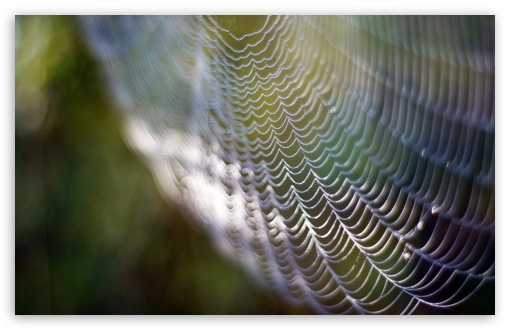 Spider Web HD wallpaper for Wide 16:10 5:3 Widescreen WHXGA WQXGA WUXGA WXGA WGA ; HD 16:9 High Definition WQHD QWXGA 1080p 900p 720p QHD nHD ; UHD 16:9 WQHD QWXGA 1080p 900p 720p QHD nHD ; Standard 4:3 5:4 3:2 Fullscreen UXGA XGA SVGA QSXGA SXGA DVGA HVGA HQVGA devices ( Apple PowerBook G4 iPhone 4 3G 3GS iPod Touch ) ; Tablet 1:1 ; iPad 1/2/Mini ; Mobile 4:3 5:3 3:2 16:9 5:4 - UXGA XGA SVGA WGA DVGA HVGA HQVGA devices ( Apple PowerBook G4 iPhone 4 3G 3GS iPod Touch ) WQHD QWXGA 1080p 900p 720p QHD nHD QSXGA SXGA ;