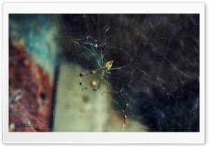 Spider Web Ultra HD Wallpaper for 4K UHD Widescreen desktop, tablet & smartphone