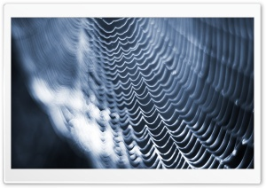 Spider Web HD Wide Wallpaper for Widescreen