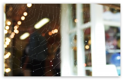 Spider Web HD wallpaper for Wide 16:10 5:3 Widescreen WHXGA WQXGA WUXGA WXGA WGA ; HD 16:9 High Definition WQHD QWXGA 1080p 900p 720p QHD nHD ; Standard 4:3 5:4 3:2 Fullscreen UXGA XGA SVGA QSXGA SXGA DVGA HVGA HQVGA devices ( Apple PowerBook G4 iPhone 4 3G 3GS iPod Touch ) ; iPad 1/2/Mini ; Mobile 4:3 5:3 3:2 16:9 5:4 - UXGA XGA SVGA WGA DVGA HVGA HQVGA devices ( Apple PowerBook G4 iPhone 4 3G 3GS iPod Touch ) WQHD QWXGA 1080p 900p 720p QHD nHD QSXGA SXGA ;