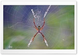 Spider Web HD Wide Wallpaper for 4K UHD Widescreen desktop & smartphone