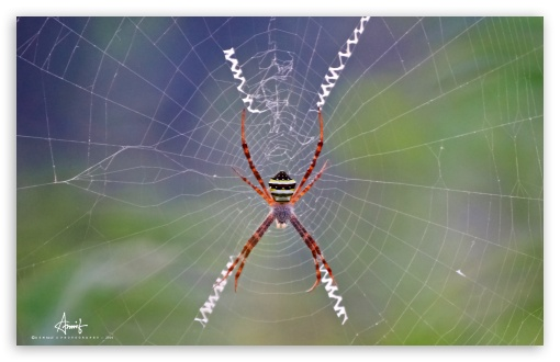 Spider Web ❤ 4K UHD Wallpaper for Wide 16:10 5:3 Widescreen WHXGA WQXGA WUXGA WXGA WGA ; 4K UHD 16:9 Ultra High Definition 2160p 1440p 1080p 900p 720p ; UHD 16:9 2160p 1440p 1080p 900p 720p ; Standard 4:3 3:2 Fullscreen UXGA XGA SVGA DVGA HVGA HQVGA ( Apple PowerBook G4 iPhone 4 3G 3GS iPod Touch ) ; iPad 1/2/Mini ; Mobile 4:3 5:3 3:2 16:9 - UXGA XGA SVGA WGA DVGA HVGA HQVGA ( Apple PowerBook G4 iPhone 4 3G 3GS iPod Touch ) 2160p 1440p 1080p 900p 720p ;