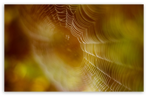 Spider Web Trap 4k Hd Desktop Wallpaper For 4k Ultra Hd Tv Wide