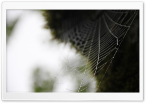 Spider Webs HD Wide Wallpaper for Widescreen