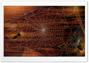 Spider Webs Hallowmas Halloween HD Wide Wallpaper for 4K UHD Widescreen desktop & smartphone