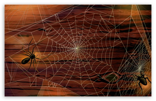 Spider Webs Hallowmas Halloween HD wallpaper for Wide 16:10 5:3 Widescreen WHXGA WQXGA WUXGA WXGA WGA ; HD 16:9 High Definition WQHD QWXGA 1080p 900p 720p QHD nHD ; Standard 3:2 Fullscreen DVGA HVGA HQVGA devices ( Apple PowerBook G4 iPhone 4 3G 3GS iPod Touch ) ; Mobile 5:3 3:2 16:9 - WGA DVGA HVGA HQVGA devices ( Apple PowerBook G4 iPhone 4 3G 3GS iPod Touch ) WQHD QWXGA 1080p 900p 720p QHD nHD ;