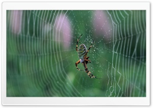 Spider With Colorful Stripes HD Wide Wallpaper for 4K UHD Widescreen desktop & smartphone