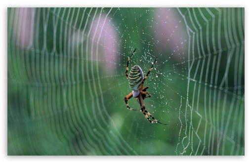 Spider With Colorful Stripes HD wallpaper for Wide 16:10 5:3 Widescreen WHXGA WQXGA WUXGA WXGA WGA ; HD 16:9 High Definition WQHD QWXGA 1080p 900p 720p QHD nHD ; Standard 4:3 5:4 3:2 Fullscreen UXGA XGA SVGA QSXGA SXGA DVGA HVGA HQVGA devices ( Apple PowerBook G4 iPhone 4 3G 3GS iPod Touch ) ; Tablet 1:1 ; iPad 1/2/Mini ; Mobile 4:3 5:3 3:2 16:9 5:4 - UXGA XGA SVGA WGA DVGA HVGA HQVGA devices ( Apple PowerBook G4 iPhone 4 3G 3GS iPod Touch ) WQHD QWXGA 1080p 900p 720p QHD nHD QSXGA SXGA ;