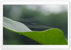 Spiders Web HD Wide Wallpaper for 4K UHD Widescreen desktop & smartphone