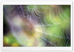 Spiderweb Ultra HD Wallpaper for 4K UHD Widescreen desktop, tablet & smartphone