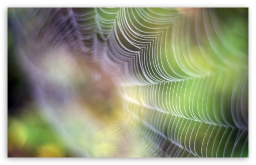 Spiderweb ❤ 4K UHD Wallpaper for Wide 16:10 5:3 Widescreen WHXGA WQXGA WUXGA WXGA WGA ; 4K UHD 16:9 Ultra High Definition 2160p 1440p 1080p 900p 720p ; UHD 16:9 2160p 1440p 1080p 900p 720p ; Standard 4:3 5:4 3:2 Fullscreen UXGA XGA SVGA QSXGA SXGA DVGA HVGA HQVGA ( Apple PowerBook G4 iPhone 4 3G 3GS iPod Touch ) ; Smartphone 5:3 WGA ; Tablet 1:1 ; iPad 1/2/Mini ; Mobile 4:3 5:3 3:2 16:9 5:4 - UXGA XGA SVGA WGA DVGA HVGA HQVGA ( Apple PowerBook G4 iPhone 4 3G 3GS iPod Touch ) 2160p 1440p 1080p 900p 720p QSXGA SXGA ;