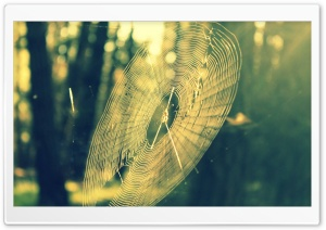 Spiderweb HD Wide Wallpaper for Widescreen