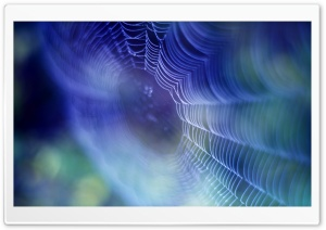 Spiderweb Background HD Wide Wallpaper for Widescreen