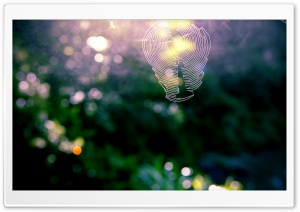 Spiderweb Bokeh HD Wide Wallpaper for Widescreen