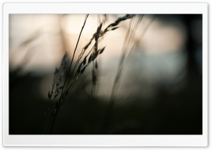 Spikelets, Bokeh HD Wide Wallpaper for Widescreen