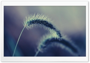 Spikelets Macro HD Wide Wallpaper for Widescreen