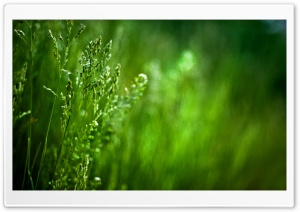 Spikes Of Grass HD Wide Wallpaper for Widescreen