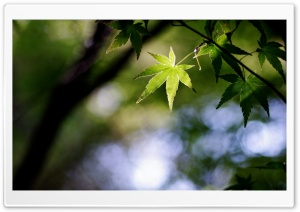 Spiky Green Leaves HD Wide Wallpaper for Widescreen