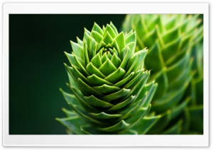 Spiral Plant HD Wide Wallpaper for Widescreen