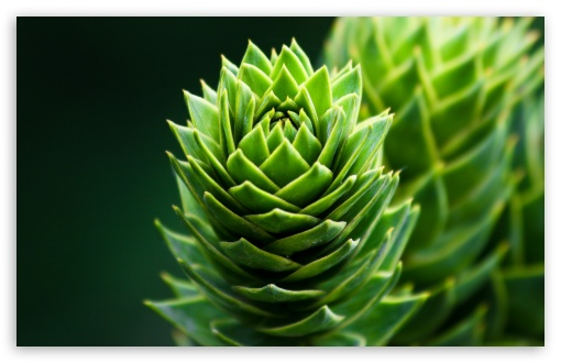 Spiral Plant HD wallpaper for Standard 4:3 5:4 Fullscreen UXGA XGA SVGA QSXGA SXGA ; Wide 16:10 5:3 Widescreen WHXGA WQXGA WUXGA WXGA WGA ; HD 16:9 High Definition WQHD QWXGA 1080p 900p 720p QHD nHD ; Other 3:2 DVGA HVGA HQVGA devices ( Apple PowerBook G4 iPhone 4 3G 3GS iPod Touch ) ; Mobile VGA WVGA iPhone iPad PSP Phone - VGA QVGA Smartphone ( PocketPC GPS iPod Zune BlackBerry HTC Samsung LG Nokia Eten Asus ) WVGA WQVGA Smartphone ( HTC Samsung Sony Ericsson LG Vertu MIO ) HVGA Smartphone ( Apple iPhone iPod BlackBerry HTC Samsung Nokia ) Sony PSP Zune HD Zen ; Tablet 2 Android 3 DVGA HVGA HQVGA devices ( Apple PowerBook G4 iPhone 4 3G 3GS iPod Touch ) ; Dual 4:3 5:4 16:10 5:3 16:9 UXGA XGA SVGA QSXGA SXGA WHXGA WQXGA WUXGA WXGA WGA WQHD QWXGA 1080p 900p 720p QHD nHD ;
